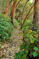 hiking trail, Tent Island, Gulf Islands, British Columbia, Canada