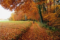 autumn scene, forest, little village promasens, Fribourg canton, Switzerland, autumn