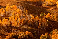 Aspens reach their fall color peak in the San Juan Mountain range in early October