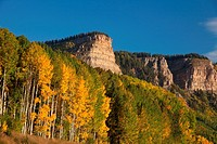 Aspen color in autumn