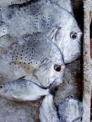 Thai fish in ice box at Thong Sala market, Koh Phangan, Thailand