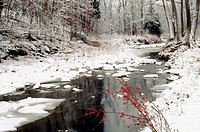 Grindstone creek in winter with American holly berries add a touch of red, Missouri USA