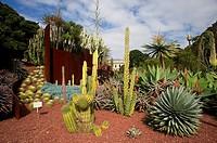desert plants, Royal Botanic Gardens, Sydney