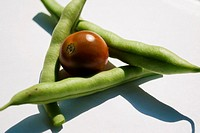 Three Green Beans and a Black Pearl Hybrid Cherry Tomato