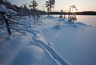 European Otter, lutra lutra, trail on snow on frozen lake ice at midwinter  Location Mustalampi Suonenjoki Finland Scandinavia Europe EU