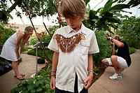 Boy with a Attacus atlas  Benalmadena Butterfly Park, Benalmadena, Malaga, Spain