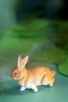 rabbit in green space