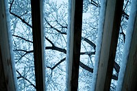 View of tree branches on a snowy day seen through the roof of a pergola