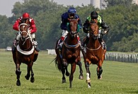 Horse racing, in Budapest, Hungary.