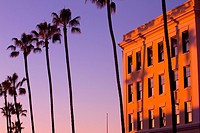 Palm Trees next to a building at sunset in La Jolla, California