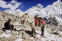 horse and rider in front of Mount Everest, 8848mts Sagarmatha National Park, Khumbu Himal, Nepal, Asia