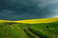 field border at a rape field in Bulgaria ahead of a thunderstorm.