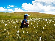 Child in a meadow of flowers cotton-grass, Trepalle, Livigno, Sondrio, Lombardy, Italy
