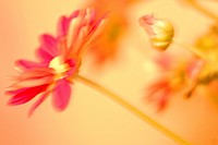 Blurred image of a flower