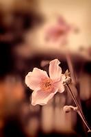 Beautiful summer flowers vintage