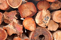 Pile of marked wood in a legal sawmill, Rio Branco, Acre, 2011