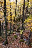 Forest at Estrela Mountain Natural Park, Portugal