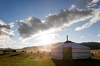 Mongolia, Orkhon Valley, View of yurt and lambs on pasture on Gobi desert