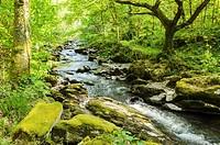 The East Lyn River flowing through Barton Wood in Exmoor during spring near Rockford, Devon, England