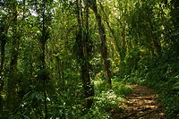 Trail in the Rain Forest of the Sierra Nevada National Park in the Andes of Venezuela
