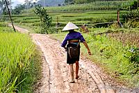 Vietnam, province of Hoa Binh, national Park of Cuc Phuong, Ban Ko Muong, White Thai ethnic group woman.