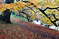 Autumn Trees by the River Nidd at Knaresborough North Yorkshire England.