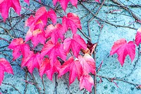 autumnal painted leaves.