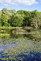 Beaver dam on lake in Township of Seguin, Parry Sound, Ontario, Canada.