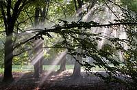 Sunlit foliage in Tiergarten (´Animal Garden´), Berlin, Germany. The Grosser Tiergarten, simply known as Tiergarten, is an urban public park of German...