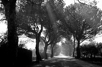 Morninglight in the Trees of a alley in Southfrance