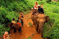 Elephant rides from village Kateung. Travel with children. Ratanakiri. Banlung is a good base to visit the countryside; you also can have short elepha...