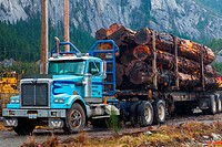 Blue logging truck loaded with Western Red Cedar logs in Squamish, Canada.