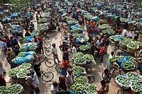 Wholesale mango market at Kansat. Chapainawabganj, Bangladesh.