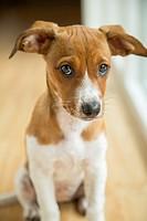 Mixed breed puppy.