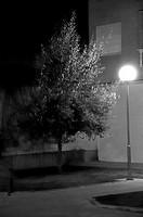 Street lamp and tree. La Bañeza, Leon Province, Spain
