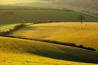 Winter morning in the South Downs National Park near Brighton, East Sussex, England.