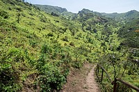 Lachay National Reserve.Huarura.Lima.Perú.Coastal hills ecosystem.