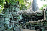 Kapok tree growing in the ruins of Preah Khan Temple, UNESCO World Heritage Site, Angkor, Siem Reap,Cambodia, Indochina, Southeast Asia, Asia.