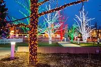 Illuminated trees near City Hall in downtown Brampton, Ontario, Canada.