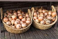Fresh onions for sale. Amsterdam.