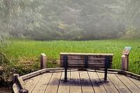 Bench along wooden walkway at Starrigavan camp ground, Tongass National Forest, near Sitka, Alaska.