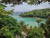 Tropical forest, Samana, Dominican Republic.