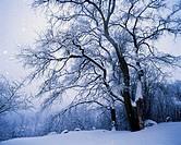 Winter. Poland