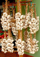 Wreath of white garlic of Lomagne, France