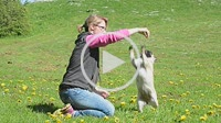 Woman play with a pug