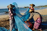 Myanmar, Rakhine State, Ngapali beach, Gyeik Taw village, Fisherwomen loading baskets of dried fish.