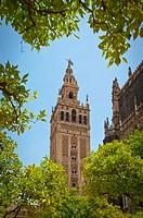 Patio de los Naranjos in the Cathedral (Seville).