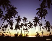 Caribbean, Nevis, Pinney´s Beach, sunset,.