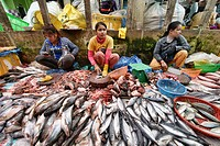 Fish in the market at Psar Leu, Siem Reap, Cambodia.