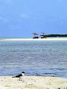 playa sebastopol turisytas vertical